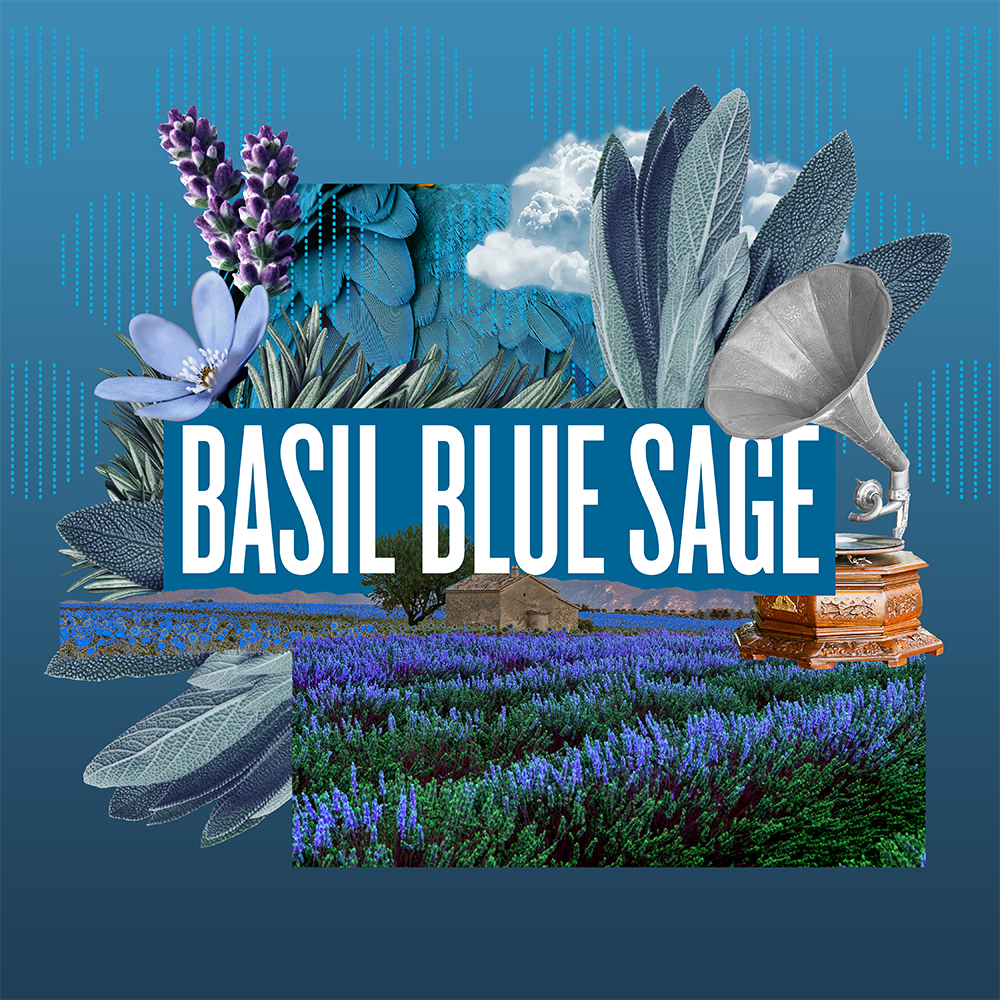2 Basil Blue Sage copy